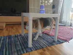 Unter dem Tischchen kann man durchkrabbeln, bei uns hat das Chelsea übernommen. © CMM