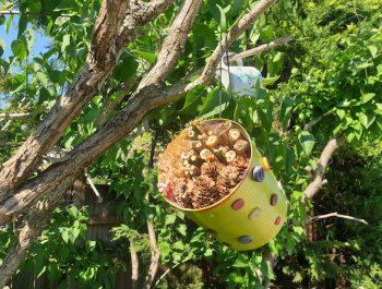 Video: Insektenhotel aus Dose oder alter Tasse