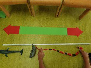 Wie viele Tiere kann man aufstellen, damit sie 1 Meter lang sind? © ausprobiert.at
